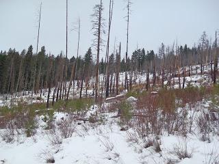 Myrtle Creek Ski
