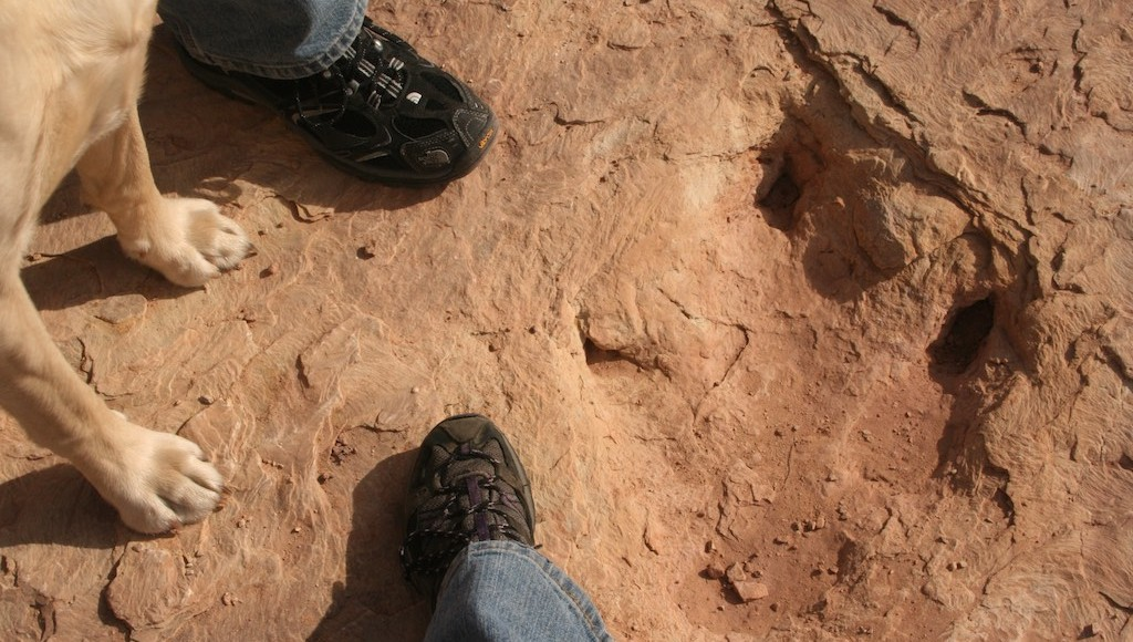 Walking in the tracks of dinosaurs
