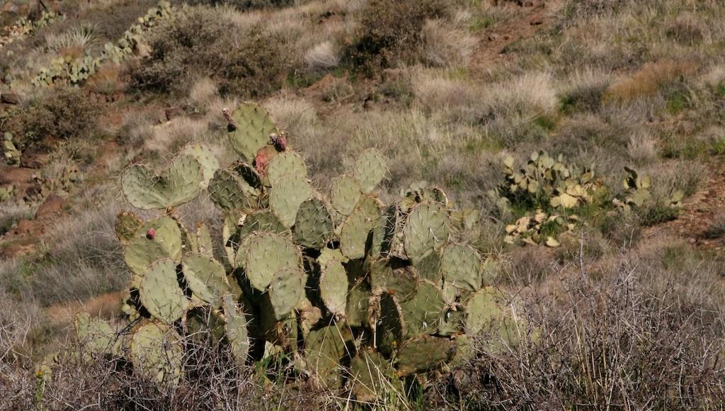 Cactus: More than a prickly pincushion
