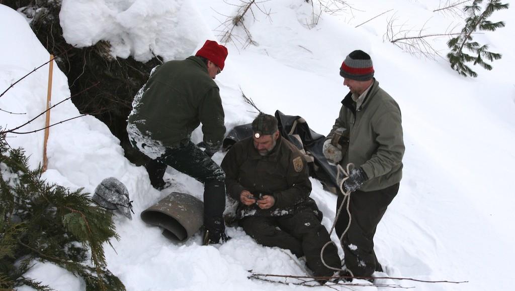 Black bear research sends biologists into bear den