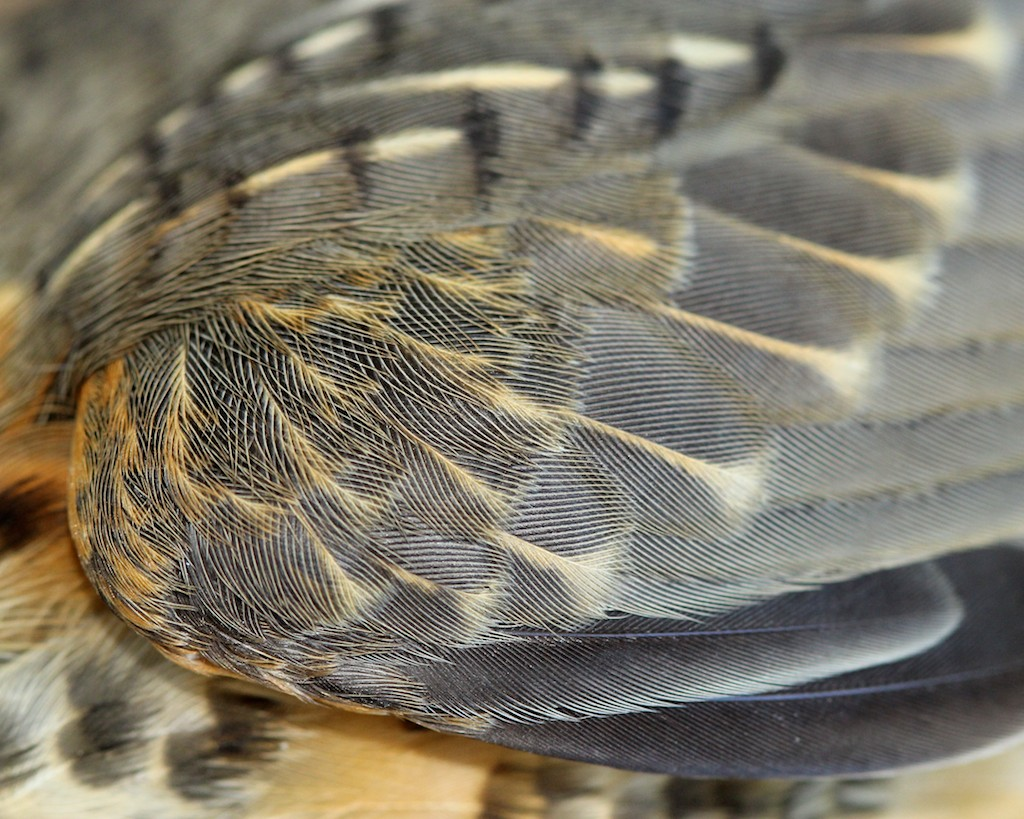 Different bird feathers - photo#49