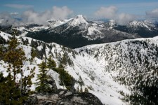High-elevation whitebark pine forests with steep slopes are favored locations for wolverines in the summer.