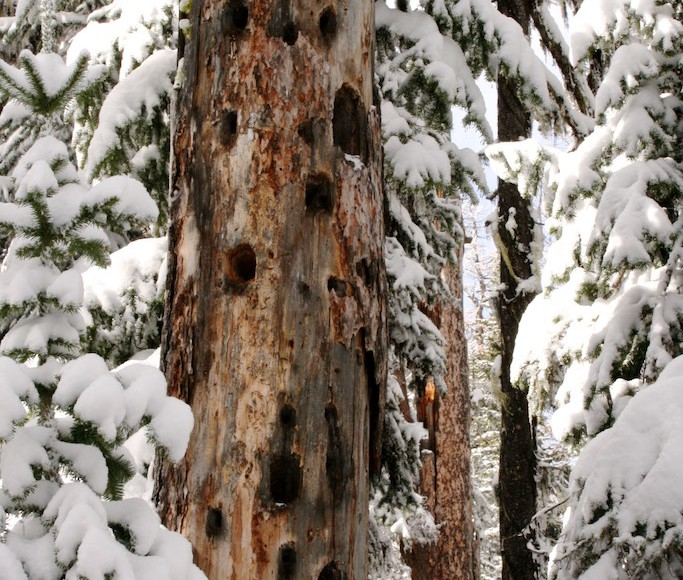Wildlife attracted to dead trees